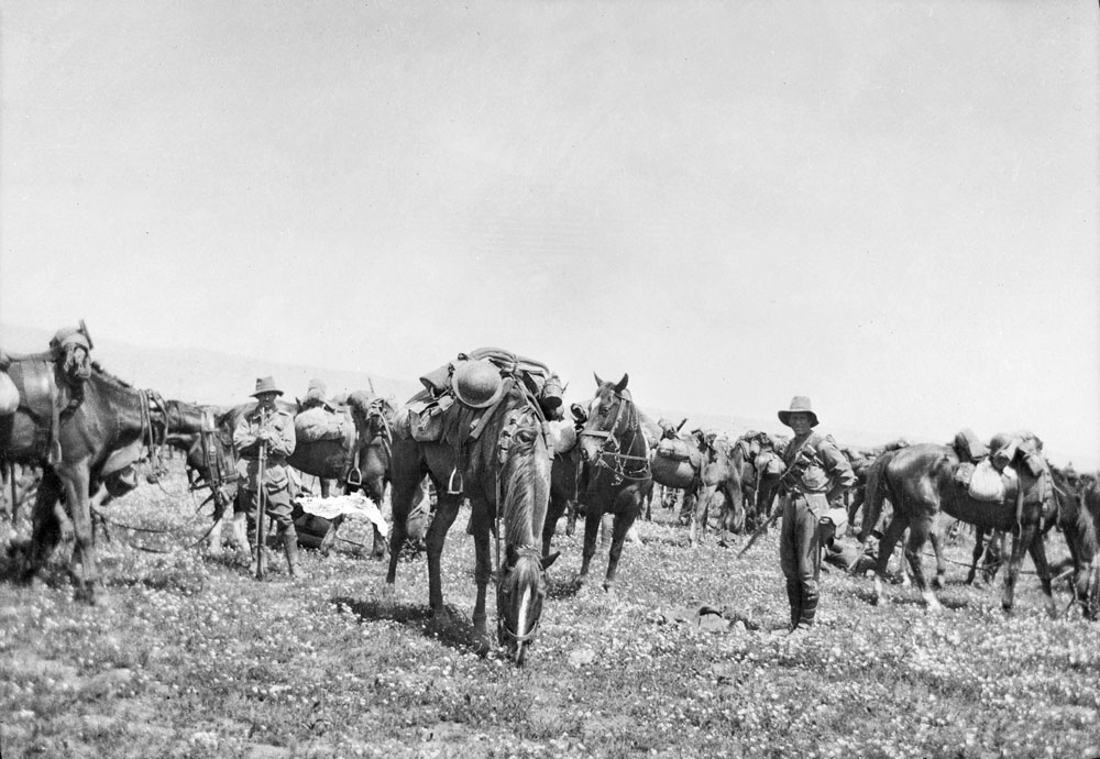 Light Horsemen and their Waler horses take a short break. Courtesy Australian War Memorial, ID J05982.