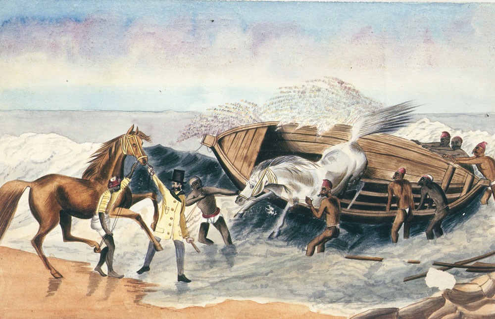 Landing [waler] horses from Australia  About 1834