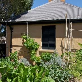 Elizabeth Farm's garden