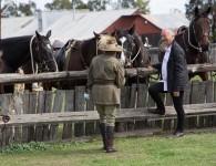 TR-HORSES-2