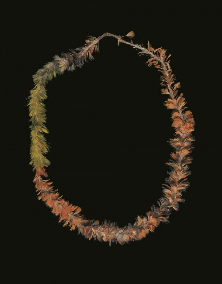 Feather necklace collected near Broome, c.1895-96 by Emile Clement.